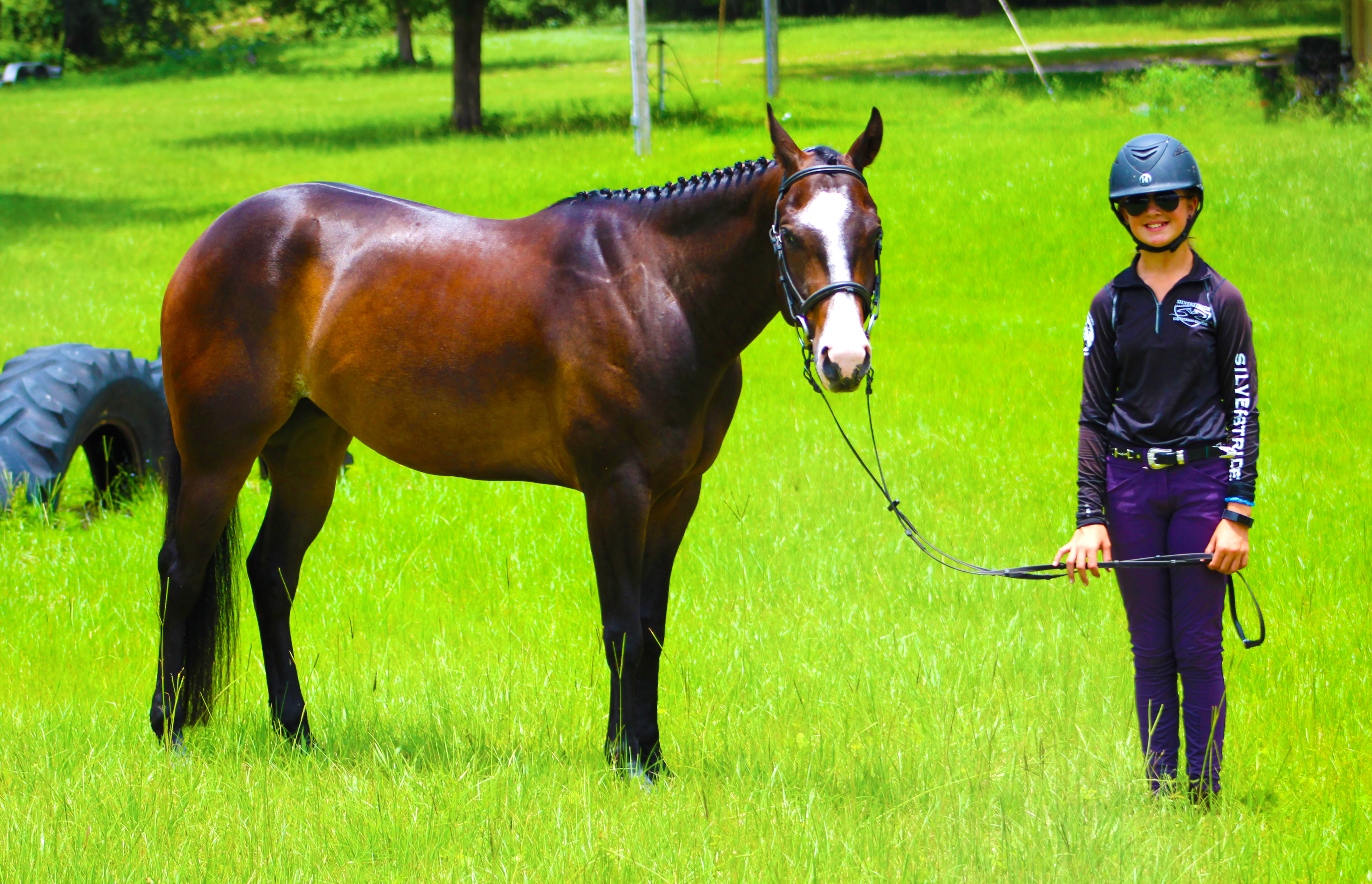 Horses For Sale Silverstride Equestrian Center