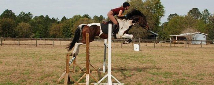 horse-training-ocala