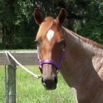 Hunter Pony For Sale in Ocala